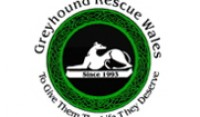 Greyhound-Rescue-Wales