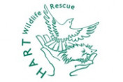 HART-Wildlife-Rescue
