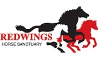 Redwings-Horse-Sanctuary