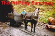 Pit Pony Sanctuary